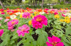 I precedenti dei fiori variopinti in parco Immagini Stock