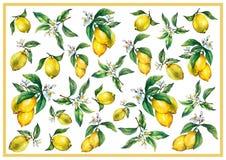I precedenti dei rami dei limoni freschi degli agrumi con le foglie verdi ed i fiori royalty illustrazione gratis