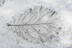 I precedenti del cemento delle foglie Fotografia Stock Libera da Diritti