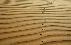 I precedenti del deserto Fotografia Stock