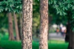 I precedenti dell'albero in parco della Tailandia Immagini Stock