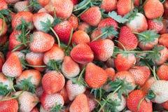 I precedenti della frutta della fragola nel mercato Fotografia Stock