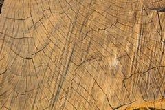 I precedenti di legno, superficie di legno, struttura di legno Immagini Stock Libere da Diritti