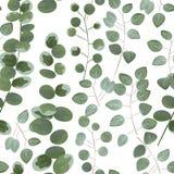 I precedenti per il testo dell'eucalyptus grigio e verde Inv Immagini Stock Libere da Diritti