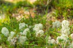 I precedenti verdi di erba Fotografia Stock