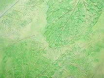 I precedenti verdi di struttura. fotografia stock libera da diritti