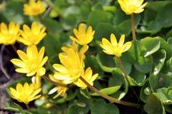 I primi fiori della sorgente Risveglio della natura Fotografia Stock Libera da Diritti