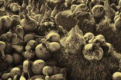 I prodotti della terra nella seppia Fotografia Stock Libera da Diritti