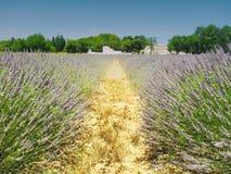 By i Provence, Frankrike, med främst lavendel royaltyfria foton