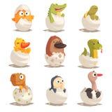 I pulcini ed i rettili covano dalle uova messe, illustrazioni future di vettore degli animali Fotografia Stock Libera da Diritti