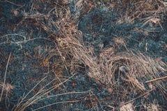 I punti neri ed il fumo da erba asciutta bruciata sono in condizioni ambientali pericolosi fotografia stock libera da diritti