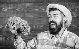 i r Фермер человека бородатый с предпосылкой загородного стиля овощей стоковые фото