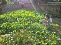I raccolti agricoli fotografia stock