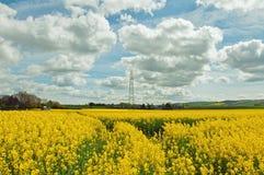 I raccolti agricoli del Canola nella campagna inglese Fotografia Stock