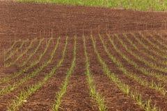 I raccolti che coltivano paesaggio Fotografie Stock Libere da Diritti