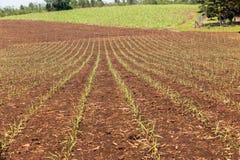 I raccolti che coltivano paesaggio Fotografia Stock Libera da Diritti