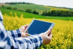 I raccolti d'esame di Using Digital Tablet dell'agricoltore di agricoltura fotografie stock