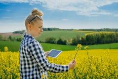 I raccolti d'esame di Using Digital Tablet dell'agricoltore di agricoltura fotografia stock