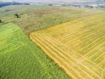 I raccolti dei cereali Fotografia Stock