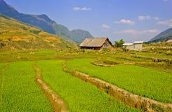 I raccolti del riso di Sapa immagine stock