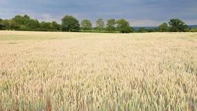 I raccolti del terreno coltivabile Immagini Stock Libere da Diritti