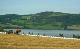 I raccolti del trattore rivoltano il fieno per gli animali domestici immagine stock