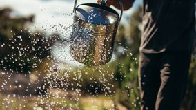 I raccolti dell'acqua dell'agricoltore con la latta fotografia stock libera da diritti