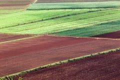 I raccolti delle verdure di agricoltura Fotografie Stock Libere da Diritti
