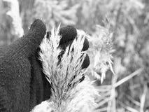 I raccolti di inverno Immagini Stock