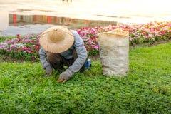 I raccolti di piantatura dell'uomo in giardino comunale Fotografia Stock Libera da Diritti