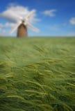 I raccolti e mulino a vento Immagini Stock Libere da Diritti