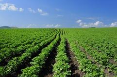 I raccolti e nel solco Fotografia Stock