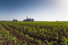I raccolti e silos Immagine Stock Libera da Diritti