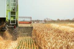 I raccolti maturi del grano di raccolto meccanico della mietitrebbiatrice Fotografia Stock