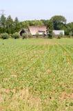 I raccolti recentemente piantati Fotografia Stock Libera da Diritti