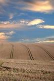 I raccolti sotto il cielo drammatico Fotografia Stock Libera da Diritti