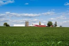 I raccolti in terreno coltivabile Fotografia Stock Libera da Diritti