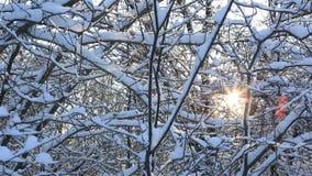I raggi dei soli fanno il loro modo attraverso i bei rami di albero snowcapped nel parco dell'inverno È la costruzione d'acciaio  video d archivio