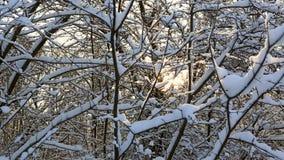 I raggi dei soli fanno il loro modo attraverso i bei rami di albero snowcapped nel parco dell'inverno Panorama orizzontale archivi video