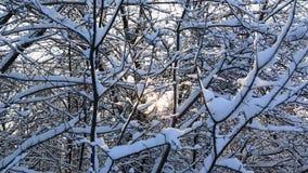 I raggi dei soli fanno il loro modo attraverso i bei rami di albero snowcapped nel parco dell'inverno Panorama orizzontale video d archivio