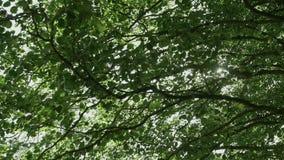 I raggi del ` s del sole fanno il loro modo attraverso i rami degli alberi archivi video