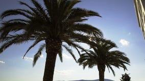 I raggi del ` s del sole fanno il loro modo tramite le foglie della palma video d archivio