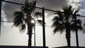 I raggi del ` s del sole fanno il loro modo tramite le foglie della palma archivi video