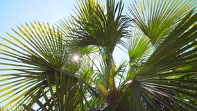 I raggi del ` s del sole fanno il loro modo tramite le foglie della palma Effetto del chiarore della lente video d archivio