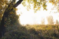 I raggi della rottura del sole attraverso la foschia di autunno di mattina e l'IL immagine stock libera da diritti
