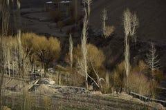 I raggi di attaccano gli ambiti di provenienza della foresta creano un tatto mistico Fotografie Stock Libere da Diritti