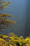 I raggi di indicatore luminoso illuminano una foresta di mattina Fotografie Stock