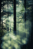 I raggi di luce hanno tagliato la nebbia Fotografie Stock Libere da Diritti
