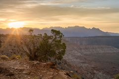 I raggi di sole strisciano sopra l'orizzonte del parco di Zion National nell'Utah del sud e splendono su un albero del ginepro su fotografie stock libere da diritti