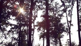I raggi di Sun fanno il loro modo attraverso gli alberi in un parco del pino stock footage